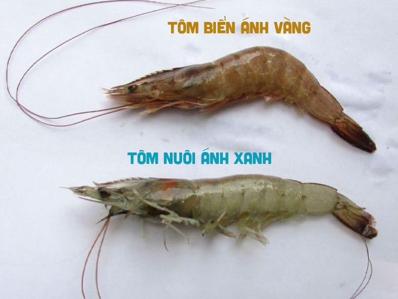 Tôm Biển Hay Tôm Nuôi Sẽ Chắc Thịt Hơn?