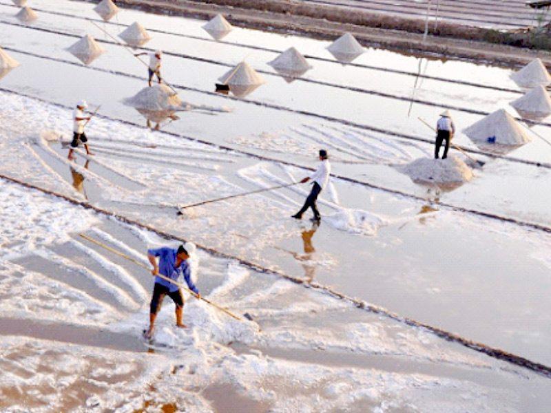 muối tinh khiết dùng ủ chượp mắm